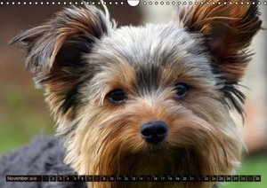 Who is watching? - Watched by Animals! (Wall Calendar 2015 DIN A