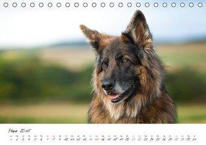 Schiller, P: Zauberhafte Langhaar Schäferhunde (Tischkalende