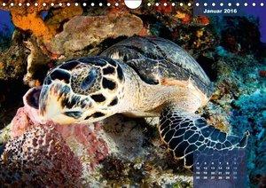 Wunderbare Wasserwelt der Meeresschildkröten (Wandkalender 2016