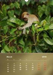 Macaques (Wall Calendar 2015 DIN A3 Portrait)