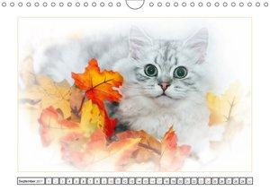 Katzen ? Treue Begleiter (CH - Version)
