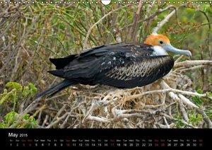 Galapagos Animals (Wall Calendar 2015 DIN A3 Landscape)