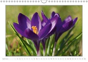 Schleswig-Holstein Jahreszeiten (Wandkalender 2016 DIN A4 quer)