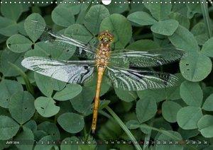 Libellen - Fliegende Edelsteine (Wandkalender 2016 DIN A3 quer)