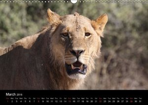 Lions - Kings of Africa (Wall Calendar 2015 DIN A3 Landscape)