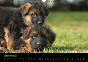 Schiller, P: German Shepherd - Puppies / UK-Version