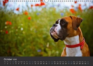 When I\'m big I will be a Boxer / UK-Version (Wall Calendar 2015
