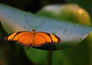 Tropische Momente - Exotische Schmetterlinge (Posterbuch DIN A4