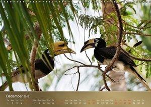 Hornbills from Southeastern Asia (Wall Calendar 2015 DIN A3 Land