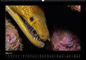 Unterwasser Portraits