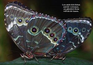 Schmetterlinge & Gedichte (Posterbuch DIN A4 quer)
