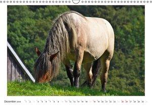Der Pferdekalender (Wandkalender 2016 DIN A3 quer)