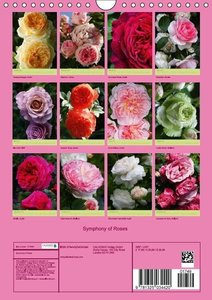 Symphony of Roses (Wall Calendar 2015 DIN A4 Portrait)