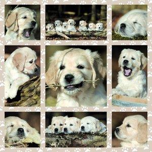 Hundekinder, 1.000 Teile Puzzle