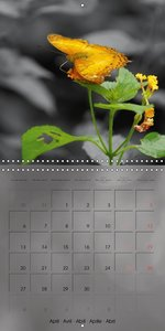 Delicate Beauties - Exotic Butterflies (Wall Calendar 2015 300 ×