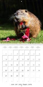 Funny Nutrias and Friends (Wall Calendar 2016 300 × 300 mm Squar