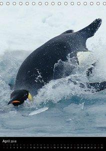 Pinguine - Wackeln im Thermo-Frack