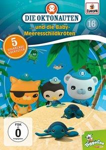 016/und die Baby-Meeresschildkröten