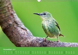 Costa Rica - Vögel des Regenwaldes