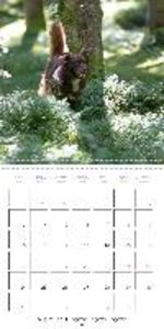 Search and Rescue Dogs (Wall Calendar 2015 300 &times 300 mm Squ