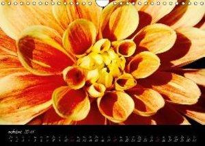 Intimités florales (Calendrier mural 2015 DIN A4 horizontal)