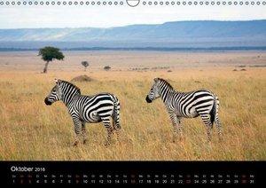 Zebras - Gestreifte Gesellen (Wandkalender 2016 DIN A3 quer)