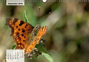 Nahe dem BodenAT-Version (Wandkalender 2016 DIN A3 quer)