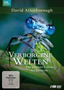 Verborgene Welten - Das geheime Leben der Insekten