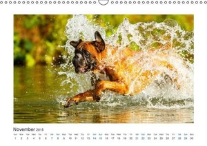 German Boxer / UK-Version (Wall Calendar 2015 DIN A3 Landscape)