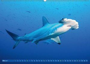 Hai: Raubtier der Meere