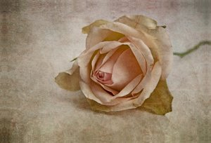 Premium Textil-Leinwand 90 cm x 60 cm quer La vie en rose
