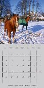 Horses our friends and companions (Wall Calendar 2015 300 × 300