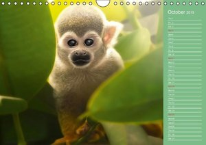 Sweet Wildlife / UK-Version / Birthday Calendar (Wall Calendar 2