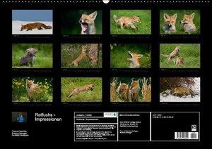Rotfuchs - Impressionen (Wandkalender 2016 DIN A2 quer)