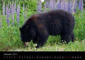Flori0: Kuschel-Tiere (Wandkalender 2015 DIN A3 quer)