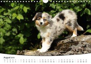 Welpen - Puppies (Wandkalender 2016 DIN A4 quer)