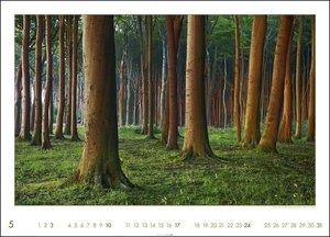 Die Pracht des Waldes Kalender 2020