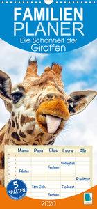 Die Schönheit der Giraffen