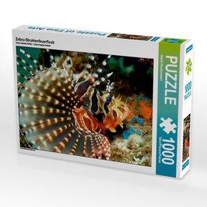 Zebra-Strahlenfeuerfisch 1000 Teile Puzzle quer