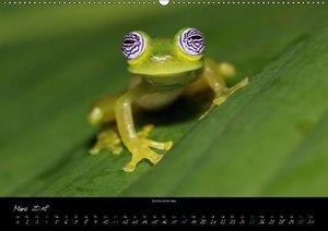 Costa Rica - Faszination Frösche