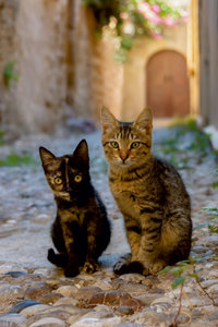 Premium Textil-Leinwand 60 cm x 90 cm hoch Katzenkinder in einer