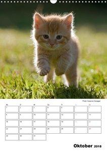 Katzenkinder - Impressionen
