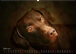 Tiere für Zuhause (Wandkalender 2019 DIN A2 quer)