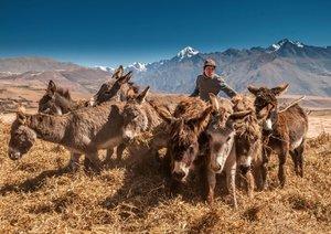 Peru, die Inkas und ihre Ahnen (Posterbuch DIN A4 quer)