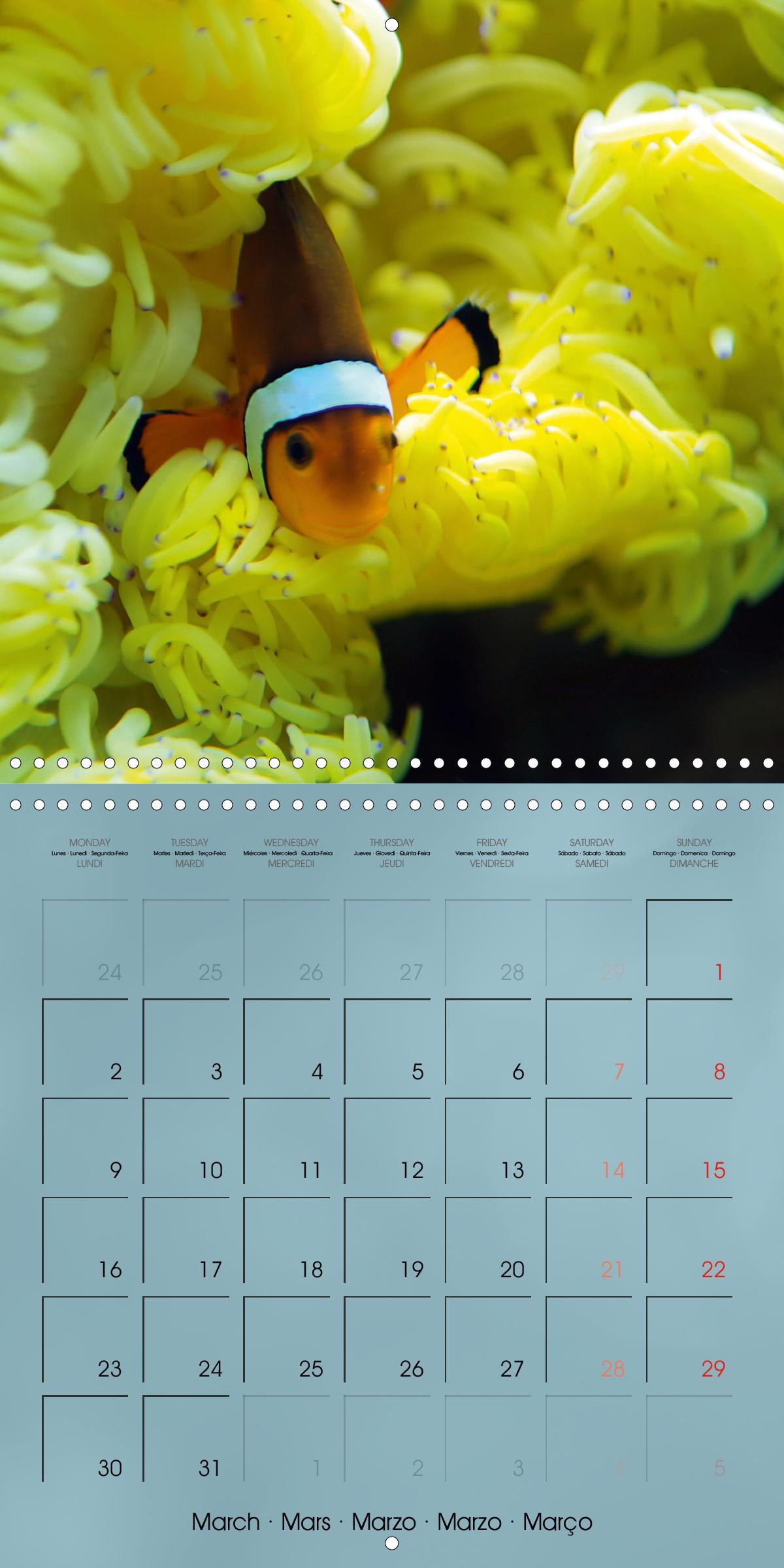 Colorful Reef Inhabitants - Fishes, Anemones and more - zum Schließen ins Bild klicken