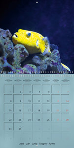 Colorful Reef Inhabitants - Fishes, Anemones and more