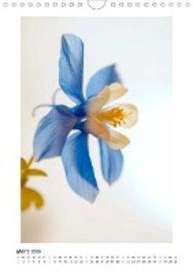 Blauer Blütenzauber