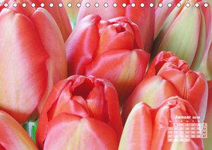 Tulpen, Tulips, Tulipes (Tischkalender 2019 DIN A5 quer)