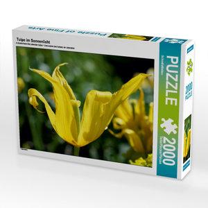 Tulpe im Sonnenlicht 2000 Teile Puzzle quer