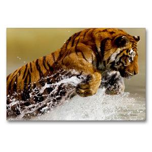 Premium Textil-Leinwand 90 cm x 60 cm quer Tiger lieben das Wass